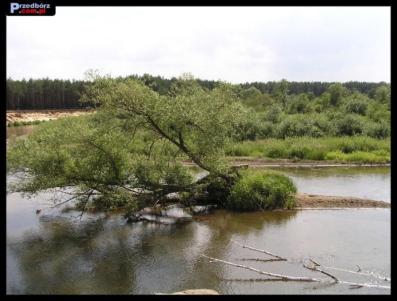 Oglądasz obraz z artykułu: Nad rzeką